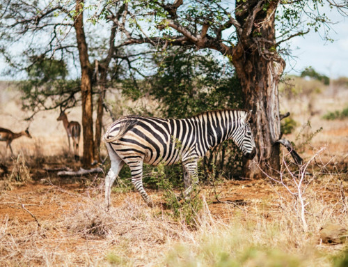 Africa Free Photos
